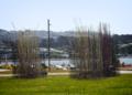 Kon Dimopoulos - Pacific Grass - Wellington0002.png