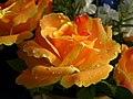Kvet dekoracia 1.jpg