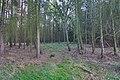 LSG Forst Rundshorn nahe Würmseeweg IMG 0157.jpg