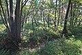 LSG Forst Rundshorn nahe Würmseeweg IMG 9887.jpg