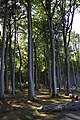 L 54a Kühlung - Gespensterwald bei Nienhagen (31).jpg