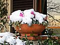 La castellina-01,02,2012-Vaso con neve.jpg