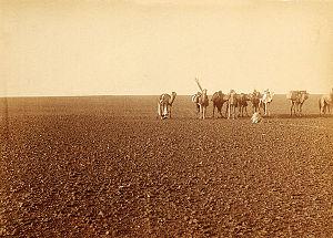 Hamada - The 'black' hamada at Tademayt, Algeria