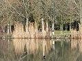 Lacs de la Folie - Contrexéville - panoramio (60).jpg