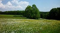 Langenenslingen - Frühlingswiese bei Egelfingen.jpg