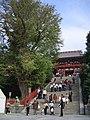 Large ginkgo in Tsurugaoka-hachimangu Shrine.jpg