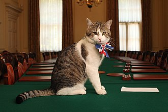 Chief Mouser to the Cabinet Office - Image: Larry Chief Mouser