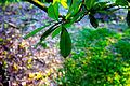 Leaf (3183726386).jpg
