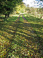 Leafy Carpet - geograph.org.uk - 585631.jpg