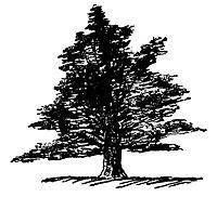 Lear 2 - Yew-small.jpg