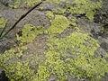 Lichen Ecrins.JPG