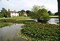 Lily pads, Matfield pond, Matfield Village Green - geograph.org.uk - 1361191.jpg