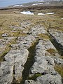 Limestone Pavement - geograph.org.uk - 1761681.jpg