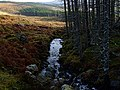 Linsidemore Wood, Aullt a Ghugheran - geograph.org.uk - 307630.jpg