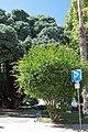 Lisboa em Julho de 2014 IMG 5098 (18552105508).jpg