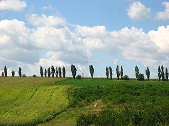 Mihăileni, Rîșcani - Image: Livezi de pruni și plantații de porumb de pe raza comunei Mihăileni