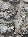Lizard (14239307994).jpg