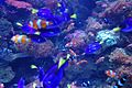 Long Beach Aquarium of the Pacific (1068759402).jpg