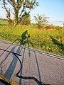 Long Shadows or Big Wheels - panoramio.jpg