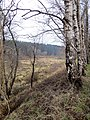 Looking back across the bog - March 2013 - panoramio.jpg