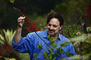 Louis Raymond (horticulturalist) - Raymond examining his coppiced specimen of Bidwill's bean tree, Erythrina x bidwillii