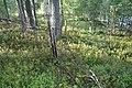 Loukhsky District, Republic of Karelia, Russia - panoramio (1).jpg
