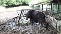 Lovech Zoo Iz12.jpg