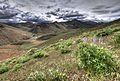 Lupine with storm clouds in the background in the Shoshone Mountains (19790015619).jpg