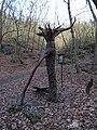 Máslovická stezka, Objímací strom.jpg