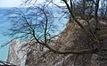 Møns Klint with beech tree living on the edge 2015-04-01-4868.jpg