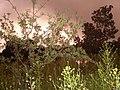 MANZANAS EN YECORA - panoramio.jpg