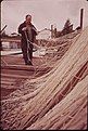 MENDING A GILLNET ON THE DOCK AT ST. HELENS ON THE COLUMBIA RIVER - NARA - 548102.jpg