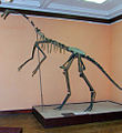 MEPAN Gallimimus bullatus skeleton copy.jpg