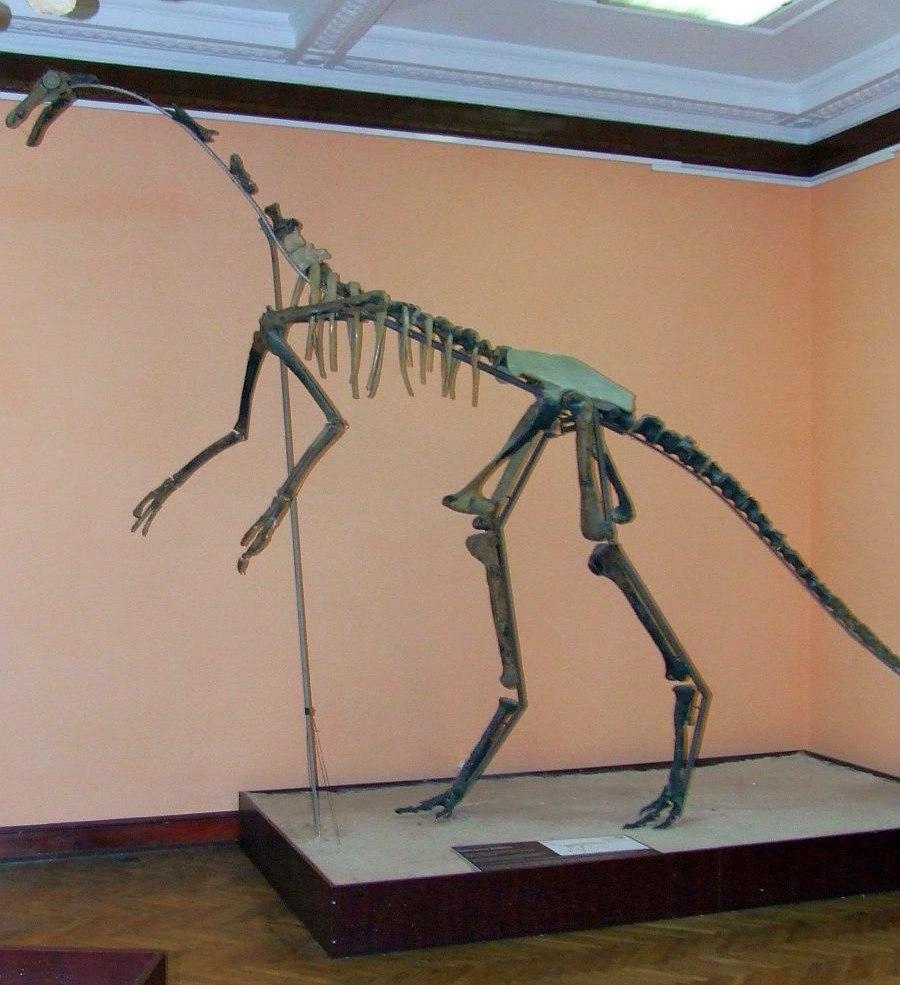 MEPAN Gallimimus bullatus skeleton copy