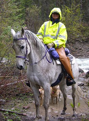 Mounted search and rescue - Team rider, horse, dogs