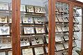 MUVa. Colección de Ciencias Naturales.JPG