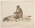 Macacus erythraeus - 1818-1842 - Print - Iconographia Zoologica - Special Collections University of Amsterdam - UBA01 IZ20000085.tif