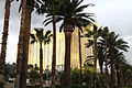 Mandalay Bay behind palm trees (3273738918).jpg