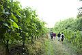 Marche Rando dans les vignes à Jurançon.jpg