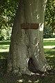 Mariatræet.jpg