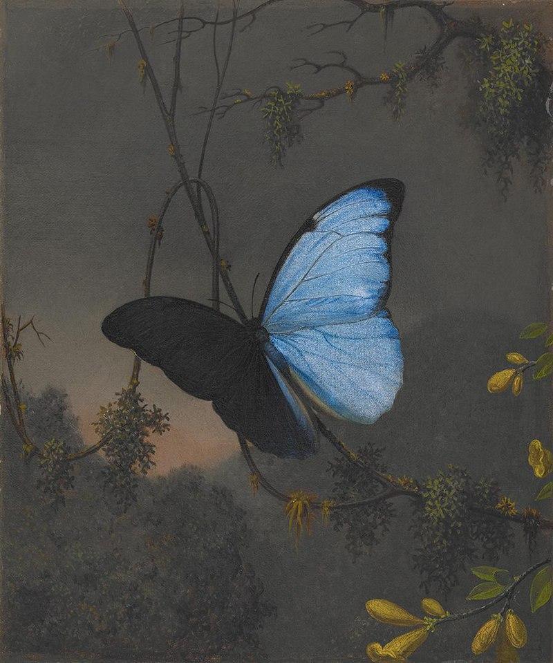 Martin Johnson Heade - Blue Morpho Butterfly - 2006.92 - Crystal Bridges Museum of American Art.jpg