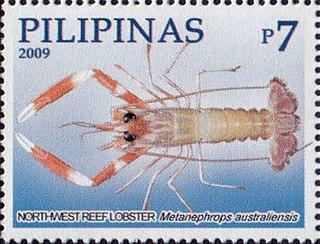 <i>Metanephrops australiensis</i> species of crustacean