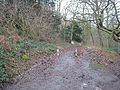 Minor road to Gullet Quarry - geograph.org.uk - 647556.jpg
