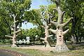 Mitachi Kotu Park 57.jpg