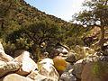 Molino Creek Boulders - Flickr - treegrow (2).jpg