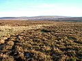 Moorland, Moor House Nature Reserve - geograph.org.uk - 1617111.jpg