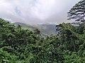 Morne Seychellois National Park rainforest.jpg