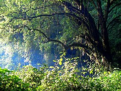 Mount Elgon Forest.jpg