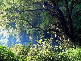 Mount Elgon Forest.jpg