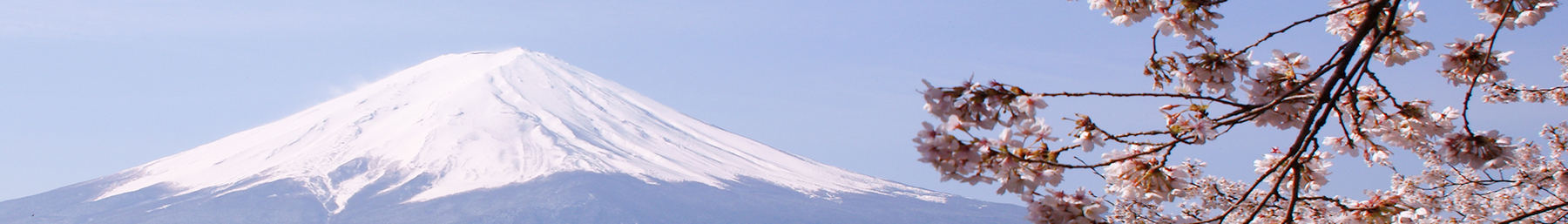 Mount Fuji banner Fuji and cherry blossoms.png